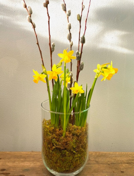 Daffodil growing pot