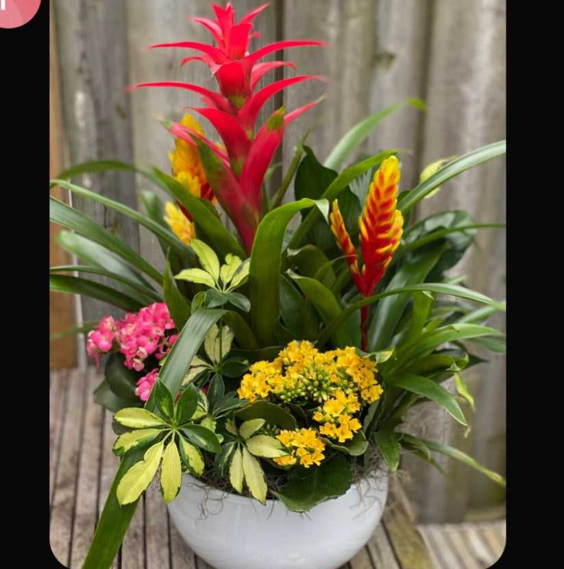 Bromeliad Bright Arrangement