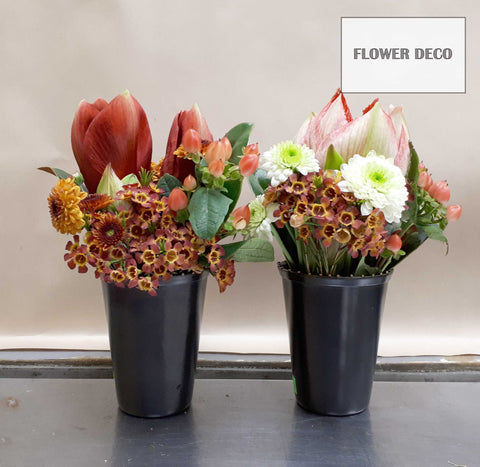 Amaryllis Small Arrangement (Set of 2)