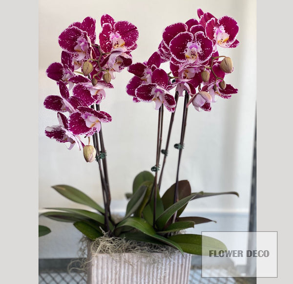 Tall Orchid arrangement
