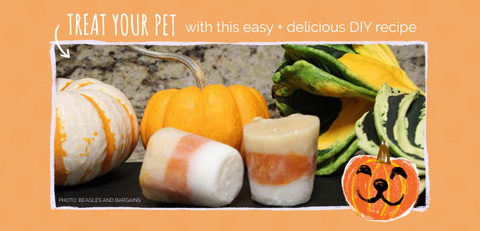 Halloween treat for dogs