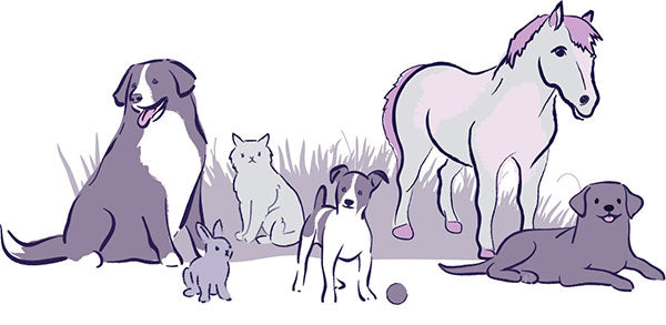 drawing of a small dog, horse, cat, and big dog playing