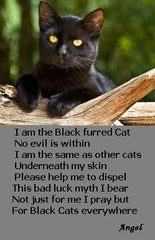 Is It True That Black Cats Are Unlucky?