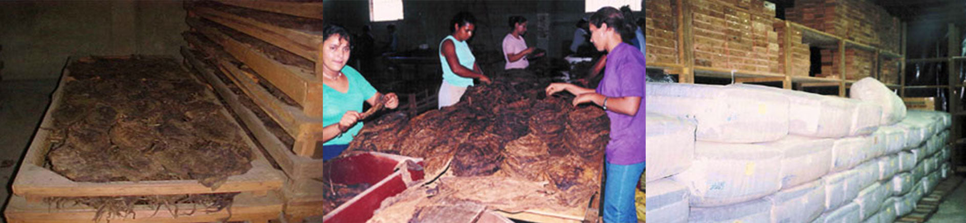 aging tobaco leaves