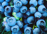 Buy Online Bluecrop Blueberry For Your Home And Garden From Maya Gardens, Inc.
