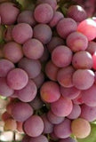 Buy Online Flame Grape Fruit Vine For Your Home And Garden.