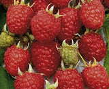 Tulameen Red Raspberry, Box Of 3