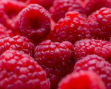 Buy Online Willamette Red Raspberry Fruit Plants For Your Home & Garden