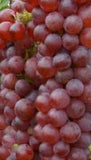 Buy Online Vanessa Red Grape Vine With Sweet, Seedless Type Of Fruit.