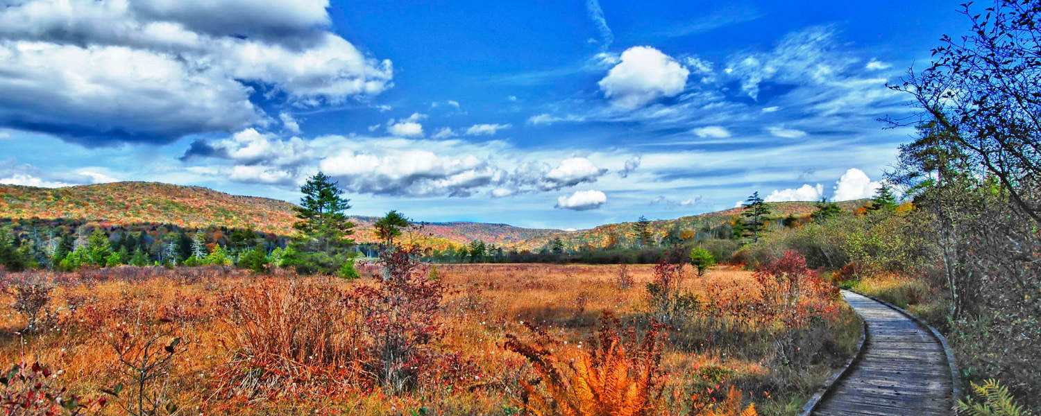 Take Me Home | Cranberry Glades - Photo by Steve Shaluta