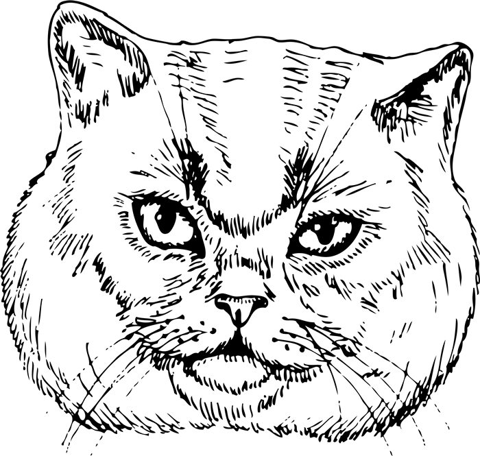 British Shorthair Cat Face (Sketch-Style) - Stamptopia