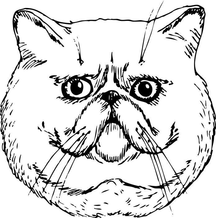 Exotic Shorthair Cat Face (Sketch-Style) - Stamptopia