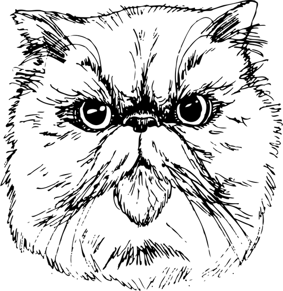 Persian Cat Face (Sketch-Style) - Stamptopia