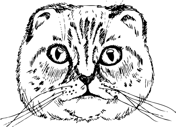 Scottish Fold Cat Face (Sketch-Style) - Stamptopia