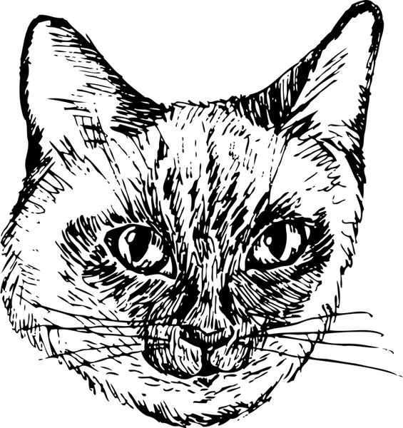 Siamese Cat Face (Sketch-Style) - Stamptopia