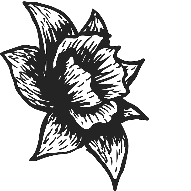 Side Sketch Of A Daffodil Rubber Stamp - Stamptopia