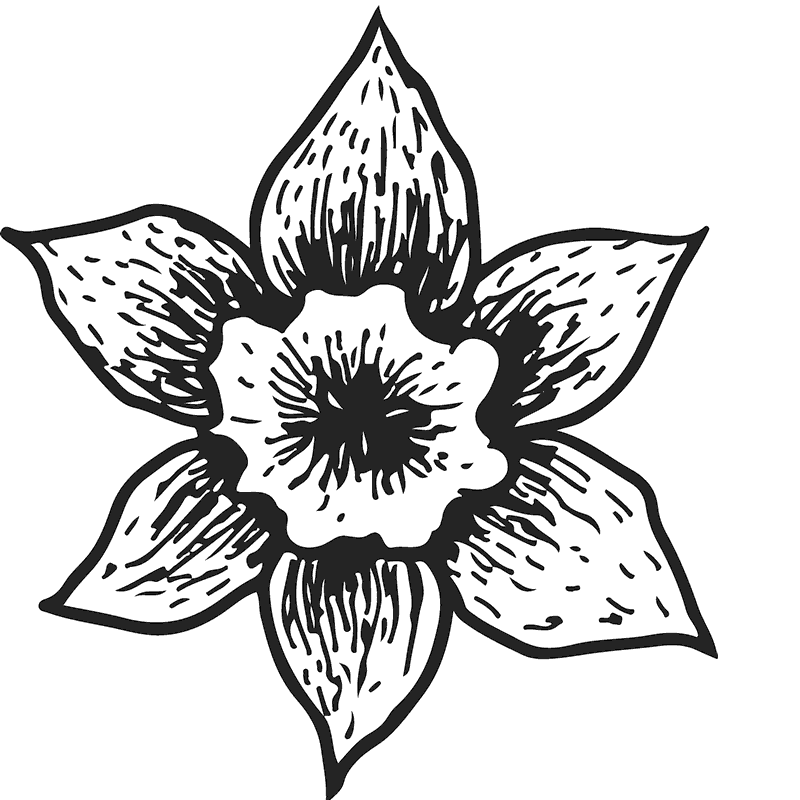 Sketch Of Blooming Daffodil Rubber Stamp - Stamptopia