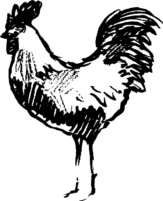 Sketched Rooster Rubber Stamp