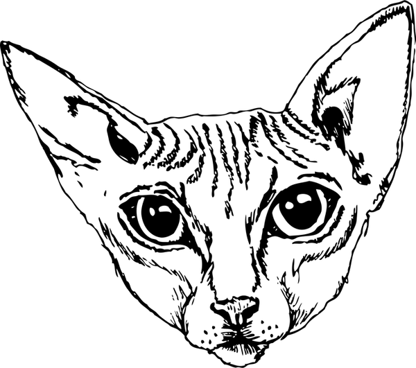 Sphynx Cat Face (Sketch-Style) - Stamptopia