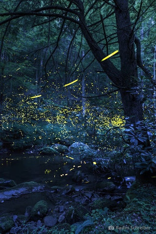 firefly experience nature immersion healing