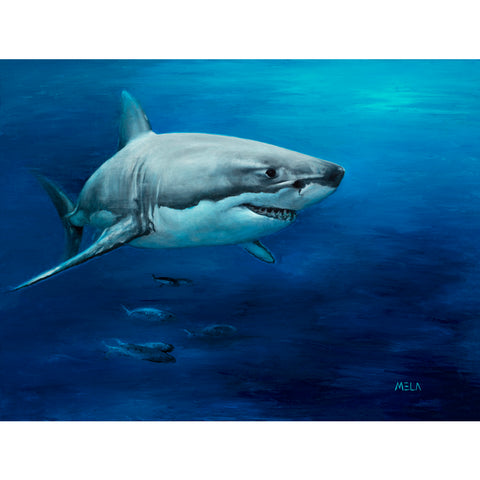 Great White Shark Original Oil Painting - SOLD