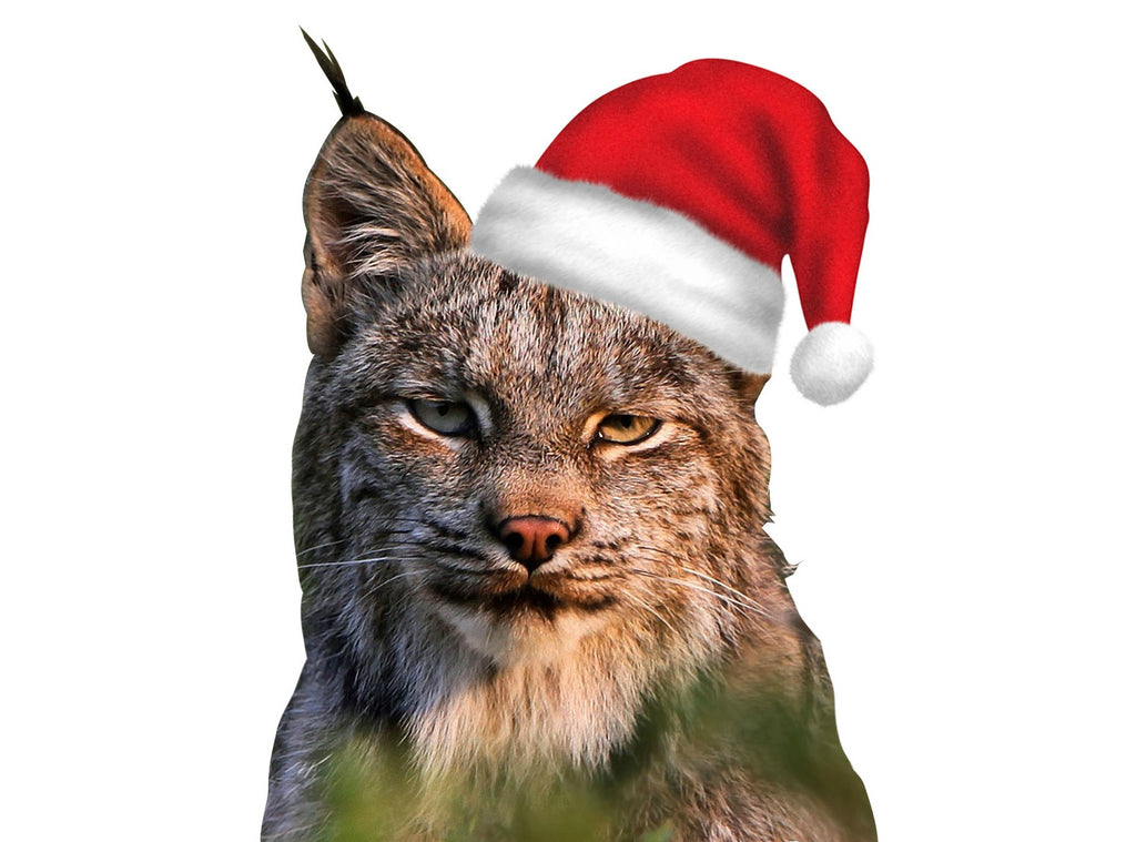 Happy Holidays from the Lynx family to yours