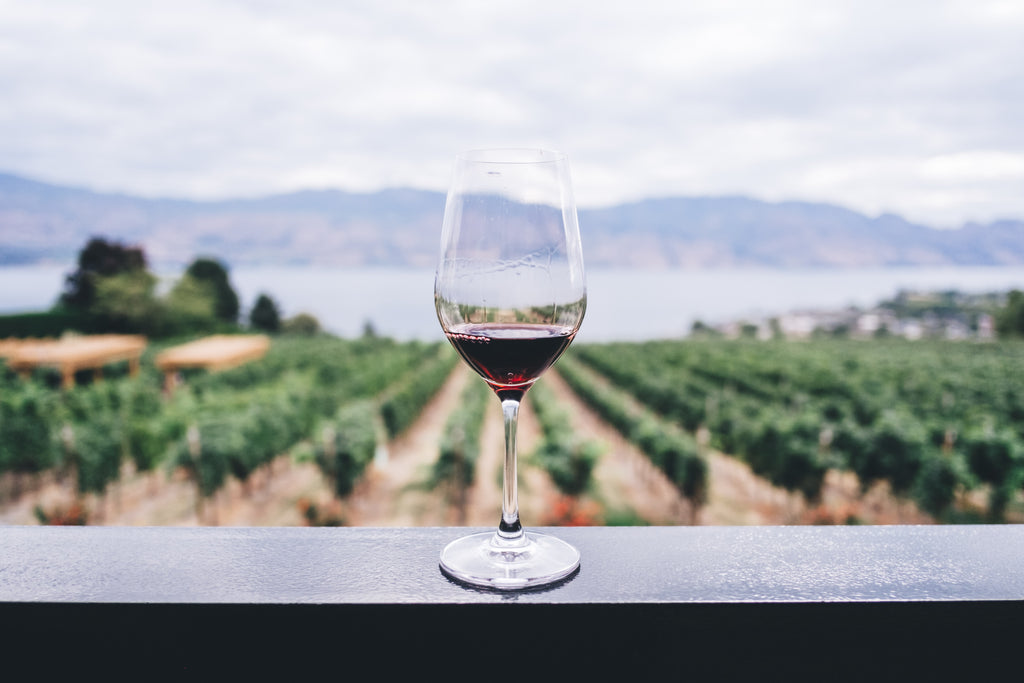 Eight North American Wine Regions to Visit In Your RV