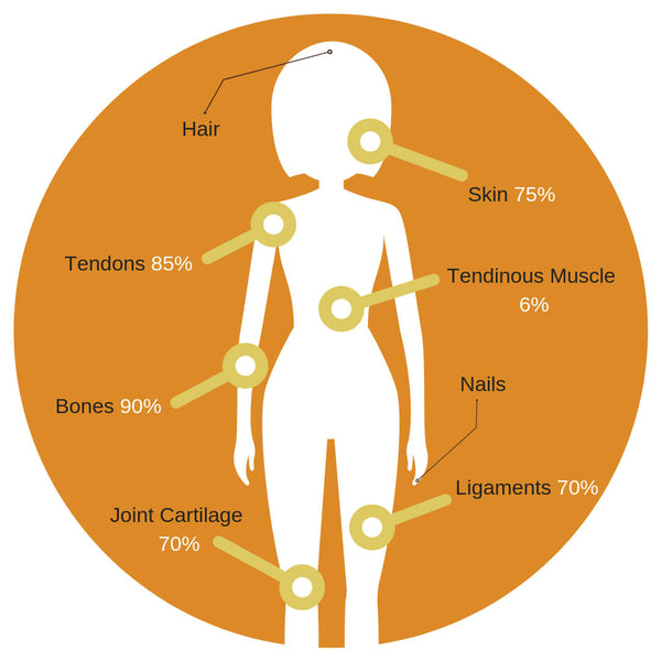 Where is collagen found in the body