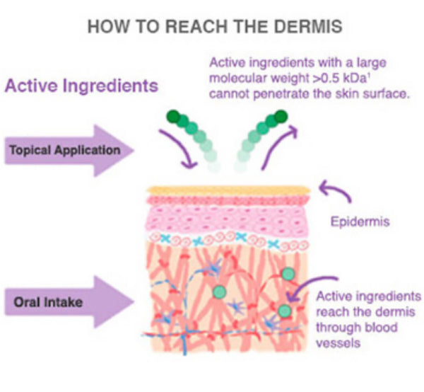 How collagen and antioxidants get delivered to our skin