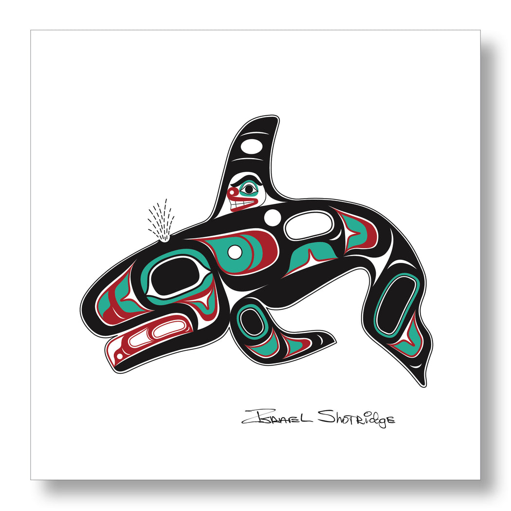 """Killer Whale"" Limited Edition Art Print - The Shotridge Collection"