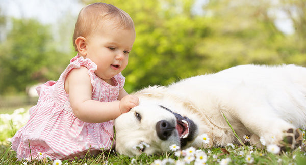 Dogs And Babies: How To Pave The Way For An Everlasting F...