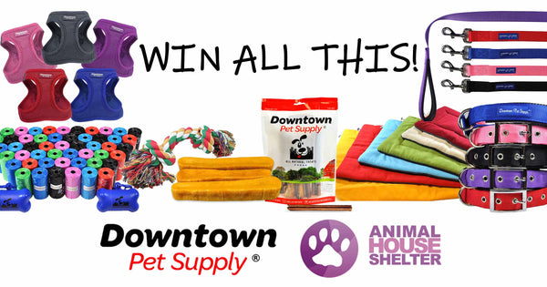 Saving Lives: Animal House Shelter and Downtown Pet Supply