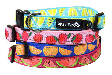 Fruit Patterned Unique Dog Collar -Soft Padded Adjustable, For Small, Medium and Large Dogs