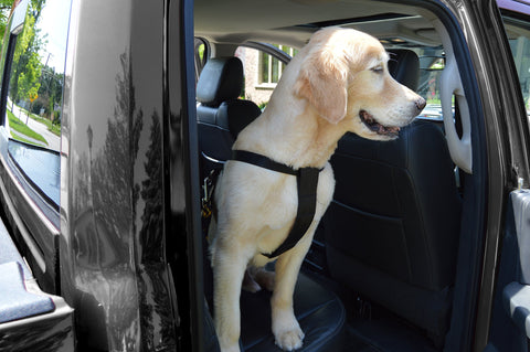 Dog Harness and Safety Seatbelt