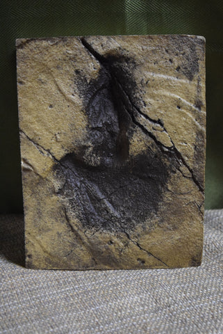 Calif. Dino Footprint-Jurassic