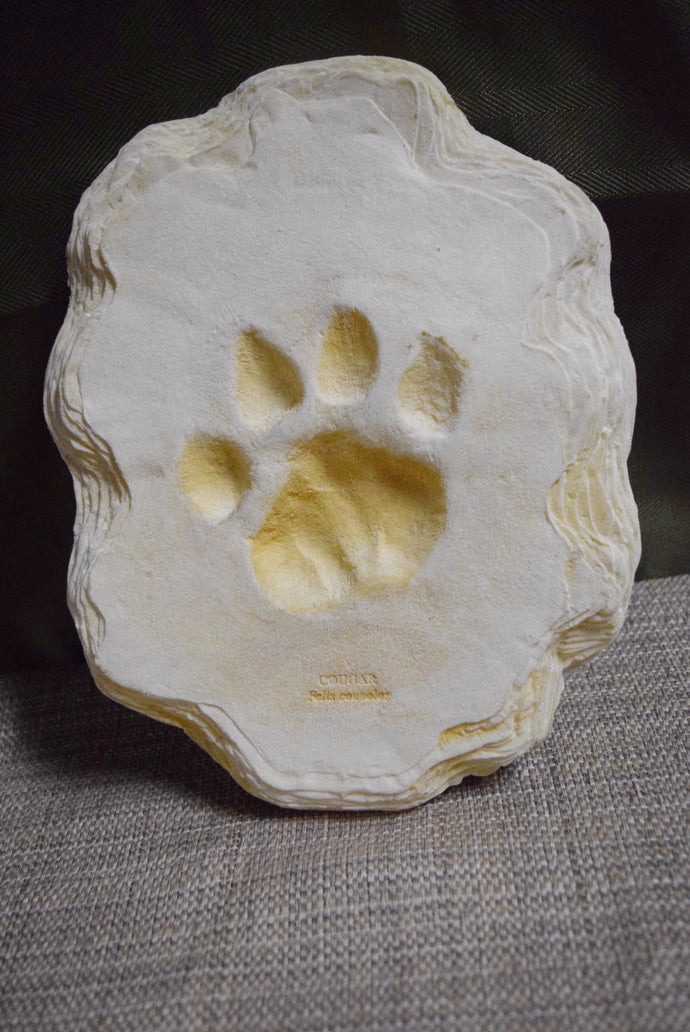 Cougar Footprint Cast