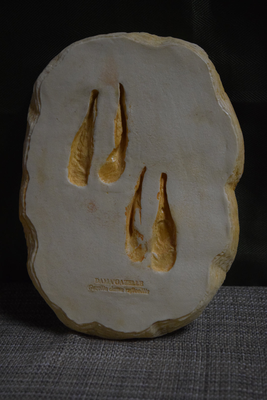 Dama Gazelle Footprint