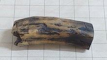 Eremotherium Giant Sloth Tooth Cast
