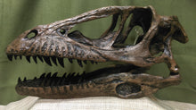 Deinonychus Skull - Full Scale