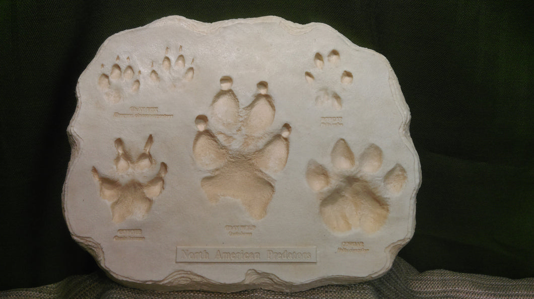North America Predators Footprints