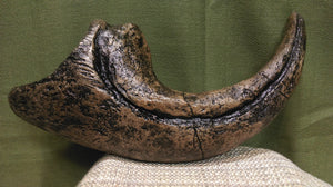 Allosaurus Record Toe Claw