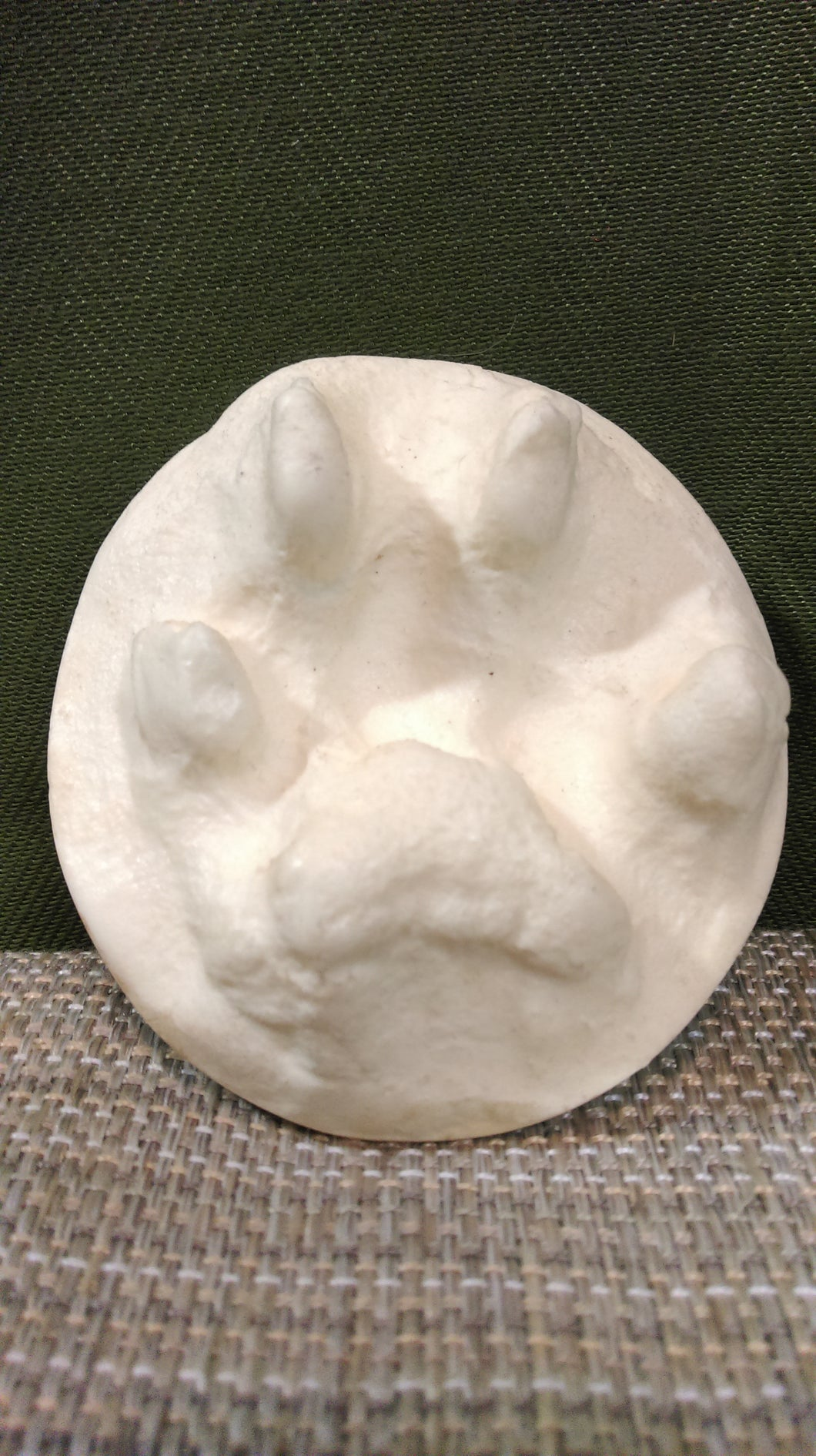 Bobcat Foot Cast