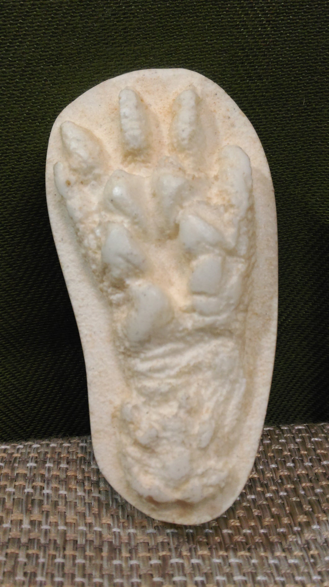 Opossum Foot Cast
