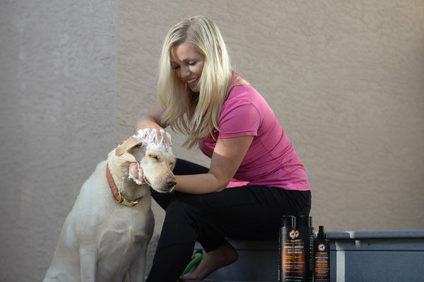 5 How-To's for Grooming Your Dog at Home