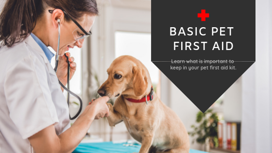 Basic Pet First Aid