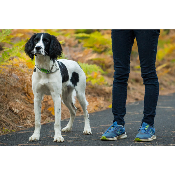 Ruffwear® | Chain Reaction™ Dog Collar