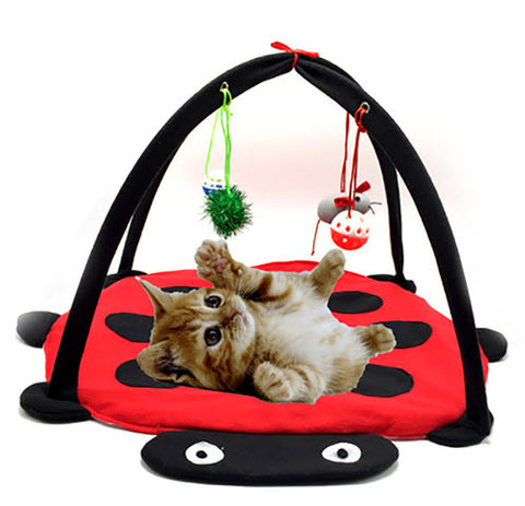 Cat Mobile Activity Playing Bed