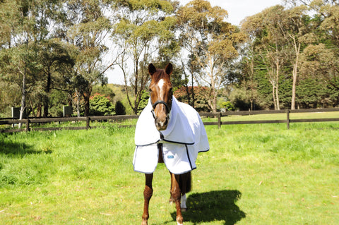 Rug Up Horsewear Mia AntiZap Flag Cloth Collection - CLICK IN TO VIEW COLLECTION - Rug Up Horsewear