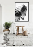 Wild Brumby Horse Black & White Wooden Framed Wall Art