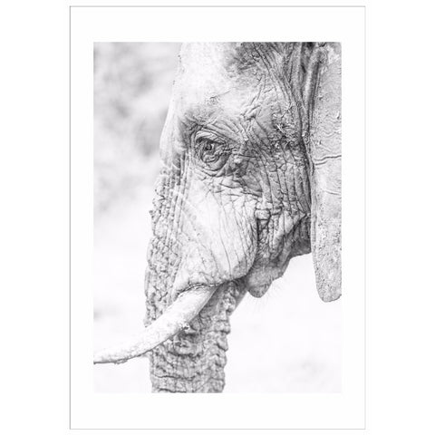 Elephant Wall Art | Portrait | 113x160x4cm - Lost Design Society
